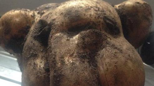 Đào được củ khoai tây khổng lồ quái dị, người phụ nữ nhận ra điều trùng hợp kỳ lạ, quyết giữ lại ở nơi trang trọng nhất trong nhà