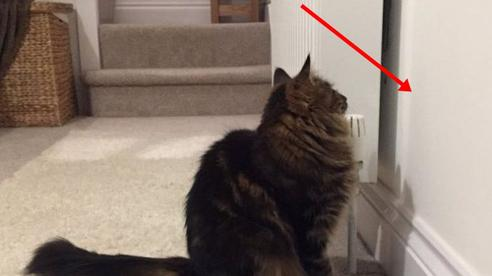 Dọn đến nhà mới, mèo cưng nhìn chằm chằm vào bức tường nhiều ngày đến khi bên trong phát ra âm thanh kỳ lạ, chủ mới nhận ra điều nguy hiểm