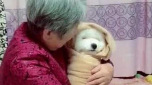 Gửi chó cưng đến cho bà ngoại chăm giúp, chàng trai khi đến thăm liền ngỡ ngàng với cảnh tượng trước mắt nhưng không cầm được nước mắt