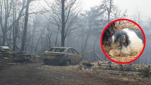 Cả gia đình sơ tán vì lửa tấn công, đến khi quay lại thì nhà đã bị thiêu rụi nhưng tìm thấy một kỳ tích khiến họ nổi tiếng gần xa