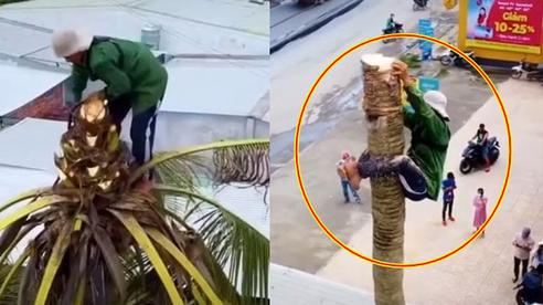 Thót tim xem cảnh người đàn ông ở miền Tây một thân một mình đu đưa cưa đổ cây dừa cao hàng chục mét