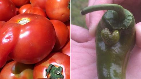 Những lần dân mạng kinh ngạc trước vẻ ngoài độc lạ của các loại trái cây, quả là bàn tay 'mẹ thiên nhiên' tạo ra có khác!