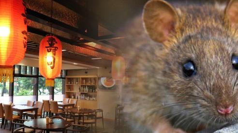 Nữ thực khách tố đi ăn nhà hàng kiểu Nhật ở Hà Nội bị chuột bò lên lưng rồi cắn đúng tối 20/10, nhưng bị ức chế hơn là lời xin lỗi vô cùng 'lạ' từ nhân viên?