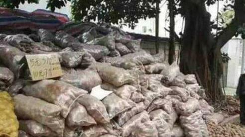 Cụ ông mang vác 32 tấn khoai tây băng qua 2.500km đến bán cho siêu thị nhưng bị từ chối, đến sáng hôm sau điều kỳ diệu đã xảy ra
