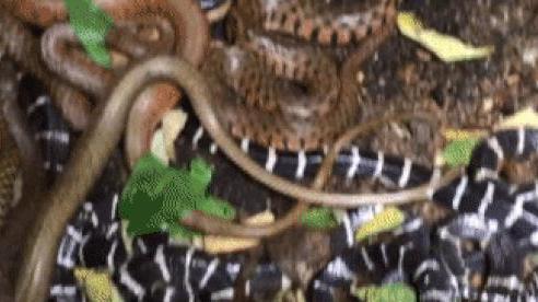 5 quan niệm sai lầm phổ biến nhất về loài rắn: Đừng để nỗi sợ lấn át lý trí bạn