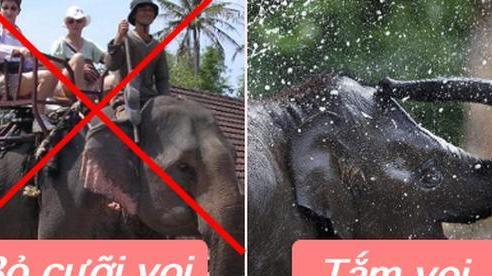 HOT: Đắk Lắk từ bỏ loại hình cưỡi voi tàn nhẫn, thay vào đó du khách có thể tắm và nô đùa với 'các bé'