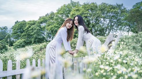 Mãn nhãn với vườn hoa cúc họa mi nở sớm nhất Hà Nội, trắng tinh khôi 'hút hồn' những người yêu cái đẹp