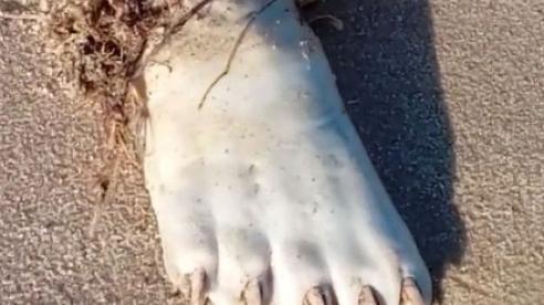Ra biển thấy 1 bàn chân trắng ởn, anh chàng hoảng hồn lên mạng hỏi rồi ngớ người với đáp án