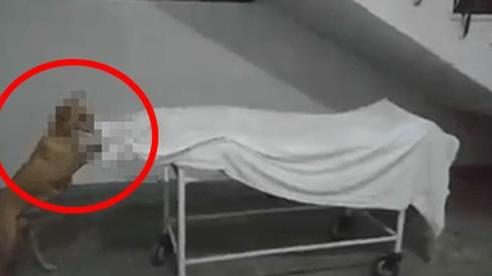 Bé gái tử vong vì tai nạn, thi thể đặt trên cáng tại bệnh viện chờ giao cho người nhà, chuyện xảy ra tiếp theo gây rùng mình và phẫn nộ