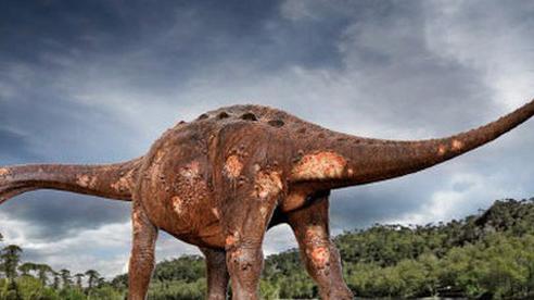 Thứ loài người sợ hãi từng quật ngã 'quái thú' 85 triệu tuổi, lớn nhất thế giới