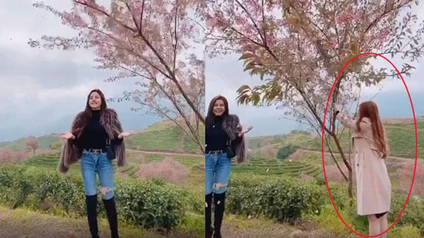 Bức xúc gái xinh rung cây để bạn tạo dáng hoa anh đào đang rơi, còn đăng clip lên mạng cười toe toét