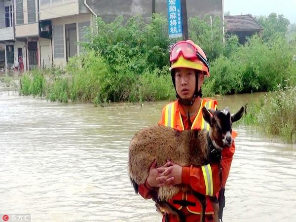 Chó, mèo, vật nuôi trong nhà may mắn gặp người thì được cứu sống.