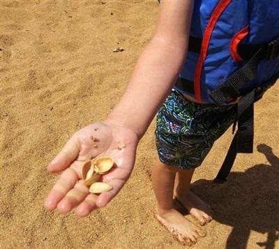 Đây là vỏ sò mà con tôi đã tìm thấy ở biển.