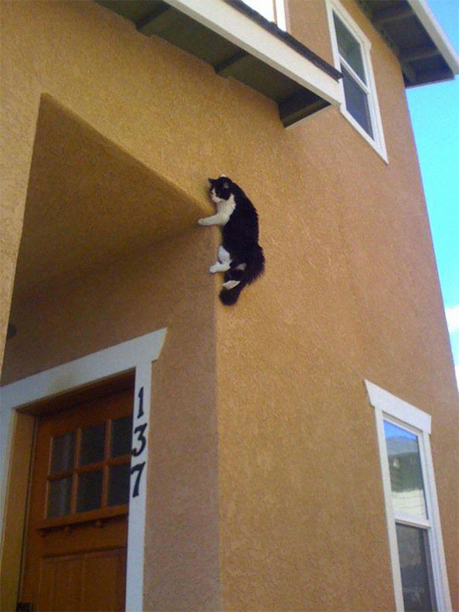 4. Ninja cũng phải tôn mèo làm 'sư phụ' nha.