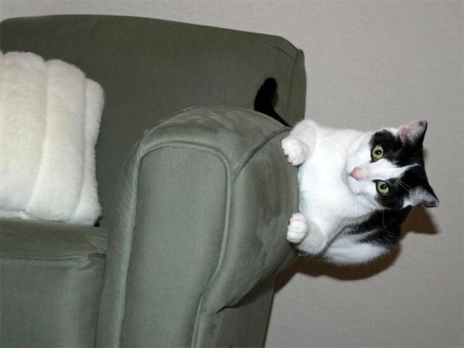 8. Tự dưng lại chả thích nằm trên ghế, mà thích nằm ở bên cạnh cơ.