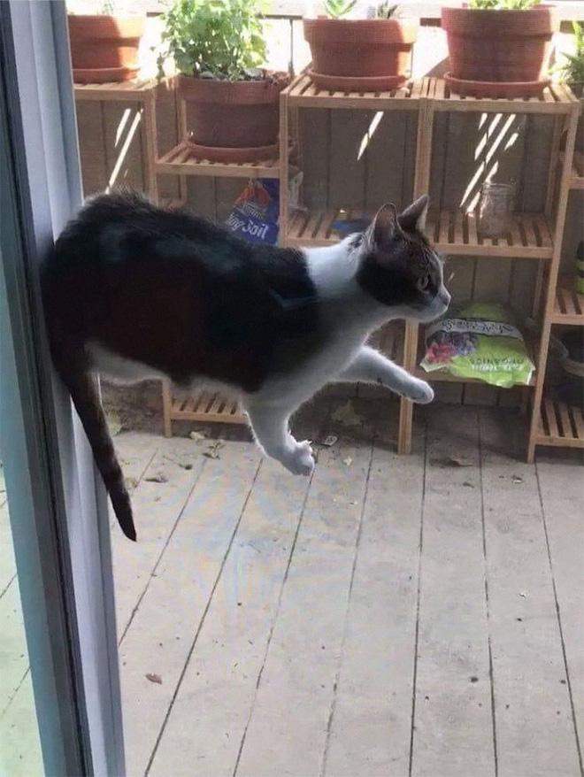 10. Tuyệt kỹ khinh công phiên bản mèo đây.