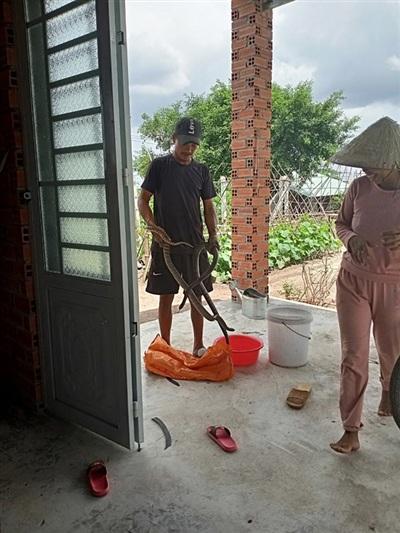 Sau tai nạn, không ai thuê mướn, để mưu sinh, anh Tâm trở thành 'thợ bắn rắn' bất đắc dĩ - Ảnh: Vietnamnet