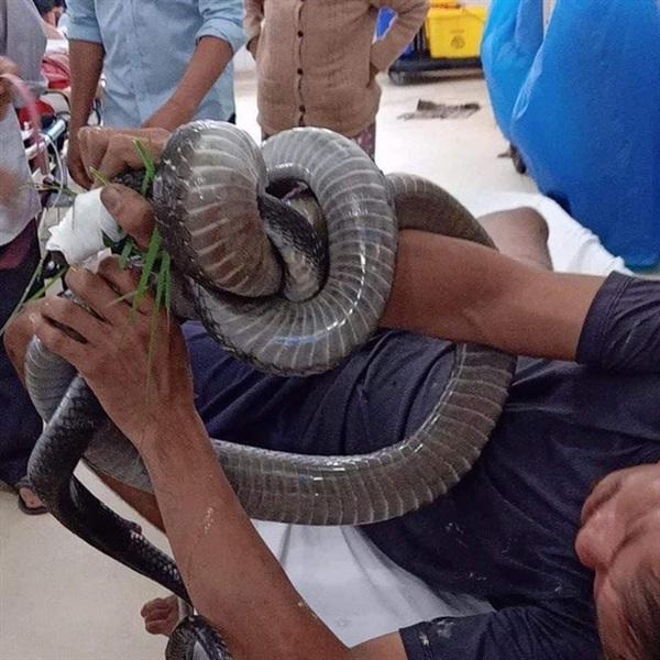 Gia đình bệnh nhân mang cả con rắn vào phòng cấp cứu để bác sĩ xác định loại rắn đã cắn - Ảnh: Facebook