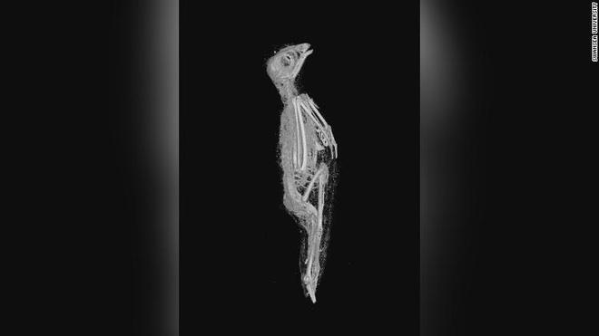 Ảnh chụp microCT xác ướp chim