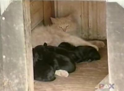Kitty coi đàn chó như con của mình.
