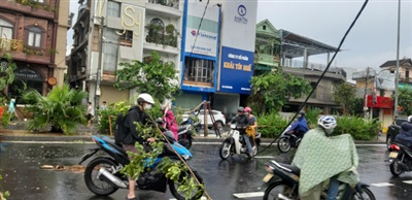 Cây xanh ngã đổ la liệt trên đường phố Huế.