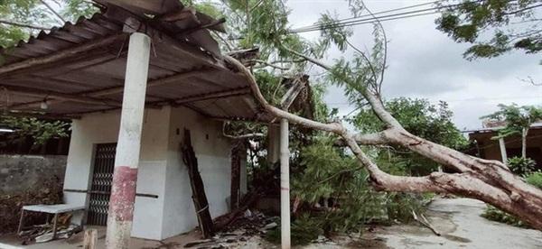 Cây lớn bị quật đổ nằm la liệt tại xã Cự Nẫm, huyện Bố Trạch