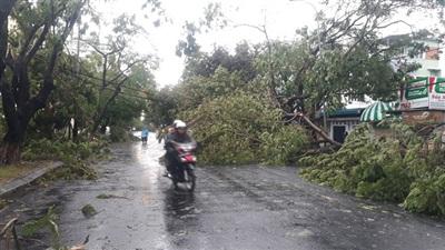 Đường phố Huế sau bão