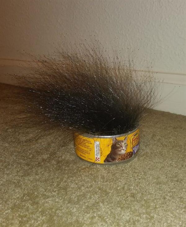 4. Còn đây là hộp thức ăn cho mèo đã 'biến hình' chỉ sau 10 ngày, quả là đáng sợ.