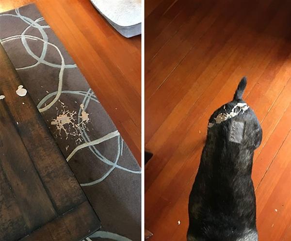 10. Con mèo nhà tôi đã nôn lên người con chó, sau đó con chó thì vung vẩy khắp nơi, vậy là tôi vừa phải tắm cho con chó, vừa phải dọn nhà.