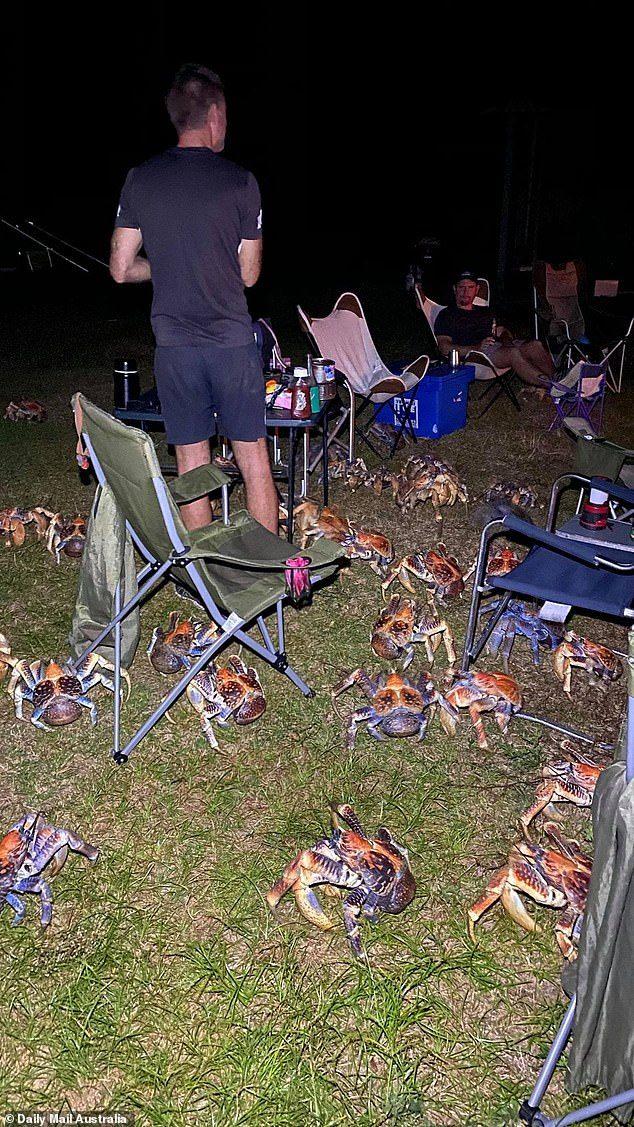 Đàn cua dừa khổng lồ ồ ạt tấn công cướp đồ ăn của khách du lịch