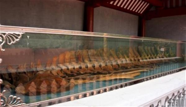 Bộ xương cá voi gần như còn nguyên vẹn, được trưng tại đền thờ cá Ông. Ảnh: Thanh Thuận