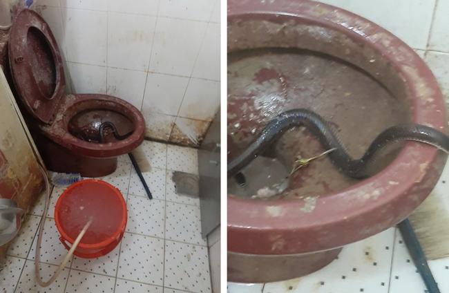 Hình ảnh cơ sở sản xuất bánh mì nhếch nhác, có rắn xuất hiện ở nhà vệ sinh khiến cộng đồng 'sốc' nặng.