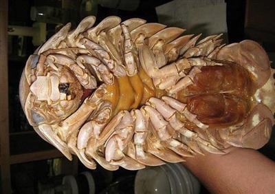 Mức giá của loại hải sản này rơi vào hàng triệu đồng/kg, thường được giới nhà giàu Việt săn đón