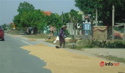 Hai bên đường Quốc lộ 1A đoạn qua huyện Quảng Ninh, người dân tận dụng để phơi lúa.