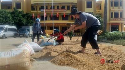 Trong sân UBND xã Võ Ninh, từ sáng sớm có rất nhiều người dân vận chuyển các bao lúa đến để phơi.
