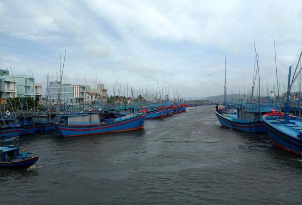 Khu vực cảng cá Tam Quan Bắc hiện tại có nhiều tàu thuyền đang neo đậu tránh bão (Ảnh: MN)