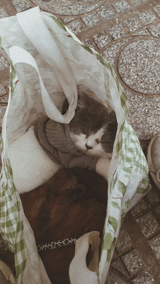 4 bé mèo giống như những thành viên trong gia đình Tuyên