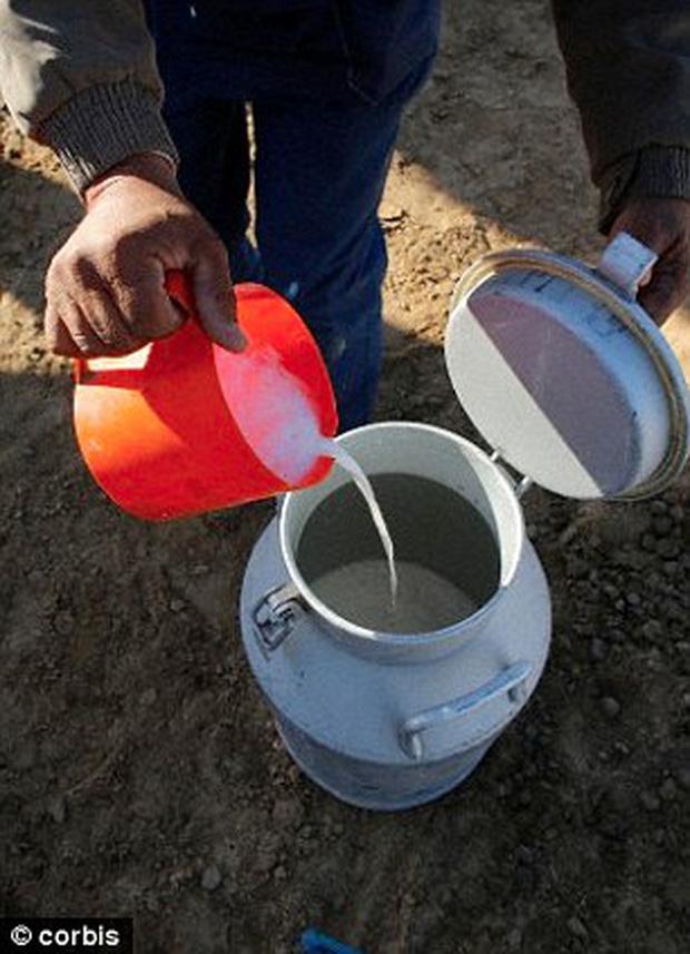 Tại 'trại béo', các bé gái phải tiêu thụ vài lít sữa lạc đà mỗi ngày.