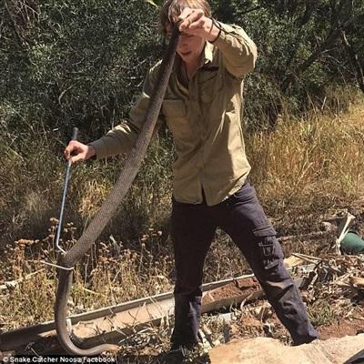 Con rắn sau đó đã được thả vào tự nhiên.
