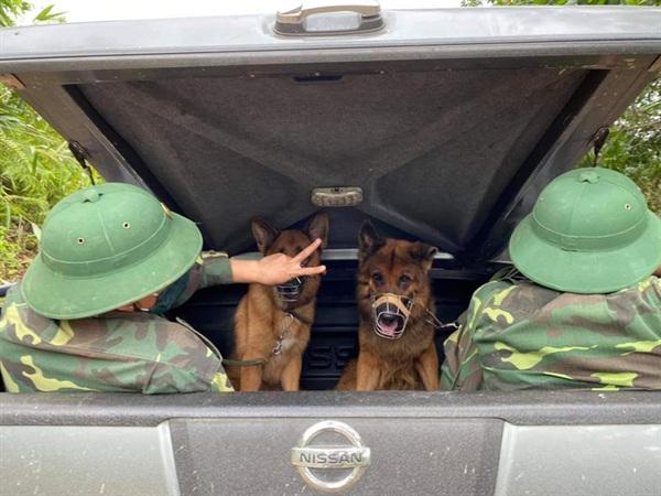 Chó nghiệp vụ được huấn luyện vào hiện trường cứu nạn