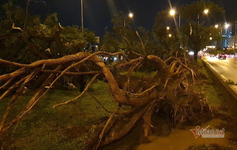 Cây xanh có chiều cao hơn 10m bị mưa dông quật ngã