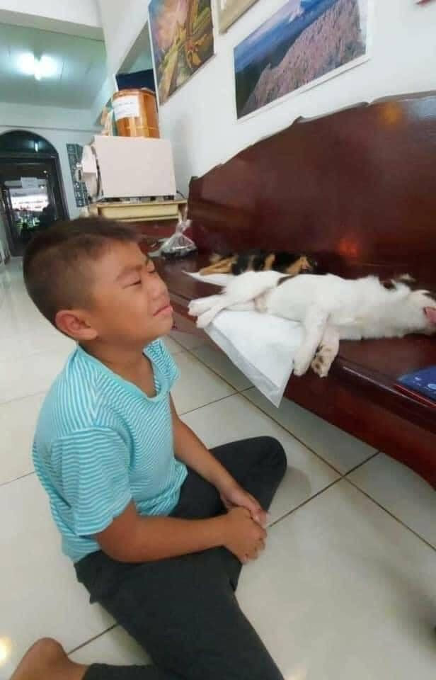 Cu cậu mếu máo vì tưởng chó, mèo đã chết