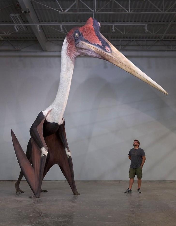 Đây là mô hình của loài động vật có cánh to nhất đã từng tồn tại trên thế giới!