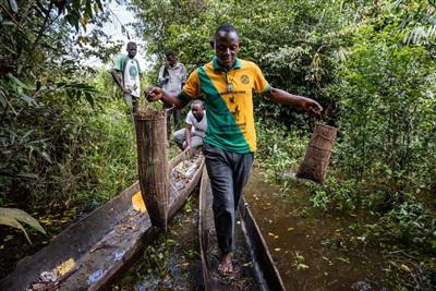 Trưởng làng Lolifa, Ikomo Bokombola Pierre, giữ hai bẫy cá chứa rắn ở miền tây Congo. Ảnh: National Geographic