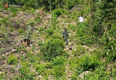 Nhiều nhóm trinh sát của các lực lượng rải quân dọc trên đèo Hải Vân băng rừng truy bắt phạm nhân.