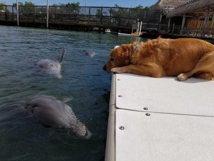 Gunner nằm im trên bờ say sưa ngắm Delta bơi lội dưới nước