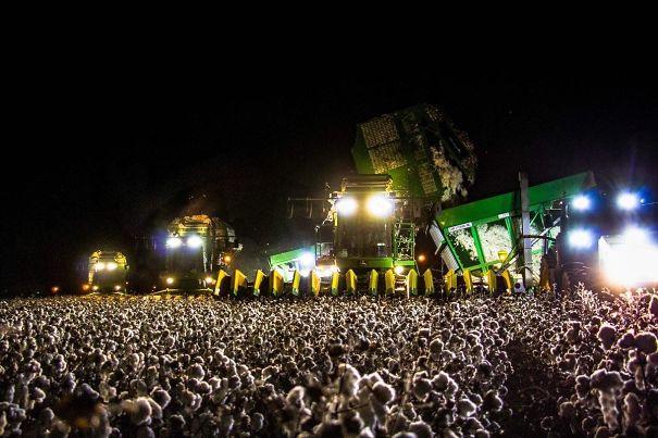 1. Buổi hòa nhạc nào mà đông người thế này? Không, thực ra đây chỉ là hình ảnh 1 cái máy hái bông đang làm việc mà thôi.