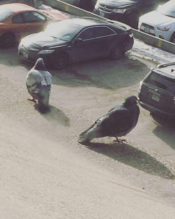 3. Ở đâu ra mấy con chim bồ câu khổng lồ to gần bằng cái ô tô thế này? Hóa ra chúng đậu trên bờ tường cách rất xa mấy chiếc ô tô đấy.