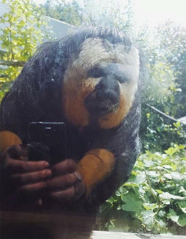 10. Tôi chụp hình 1 con khỉ, thế mà ảnh phản chiếu qua cửa kính trông cứ như nó tự selfie vậy.