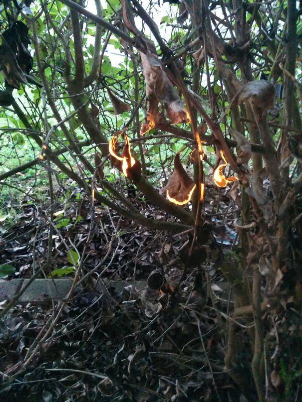 11. Cháy rừng rồi bà con ơi! Ấy từ từ bình tĩnh đã, chỉ là ánh nắng len qua tán cây và trông như mấy cái lá đang bị cháy thôi.